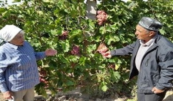 Project scientist on the left talks with farmer vine grower. Photo credit: Bioversity Uzbekistan