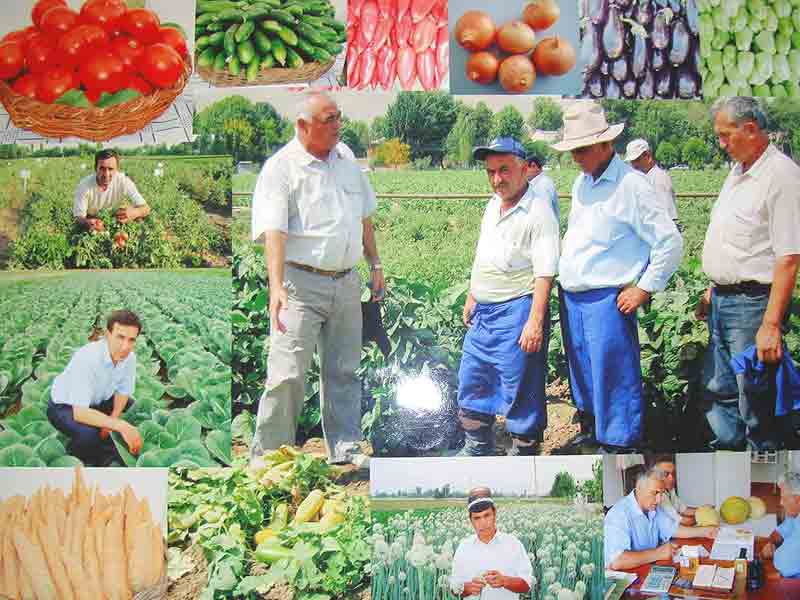 Activity of Tajik Institute of Horticulture and Vegetable Growing