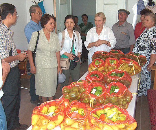 Researchers of KRIPVG demonstrate sweet pepper germplasm
