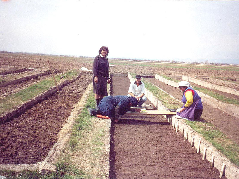 Sowing of seeds for seedlings and trial
