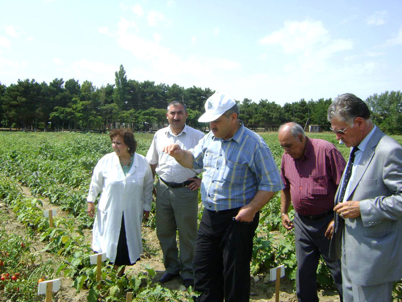 Experimental field probation in Azerbaijan Research Institute of Vegetable Growing