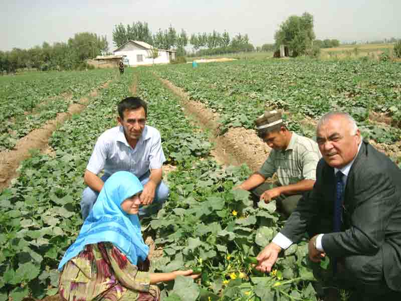 National coordinators Tursun Akhmedov and Bakhrom Sanginov on farmers field
