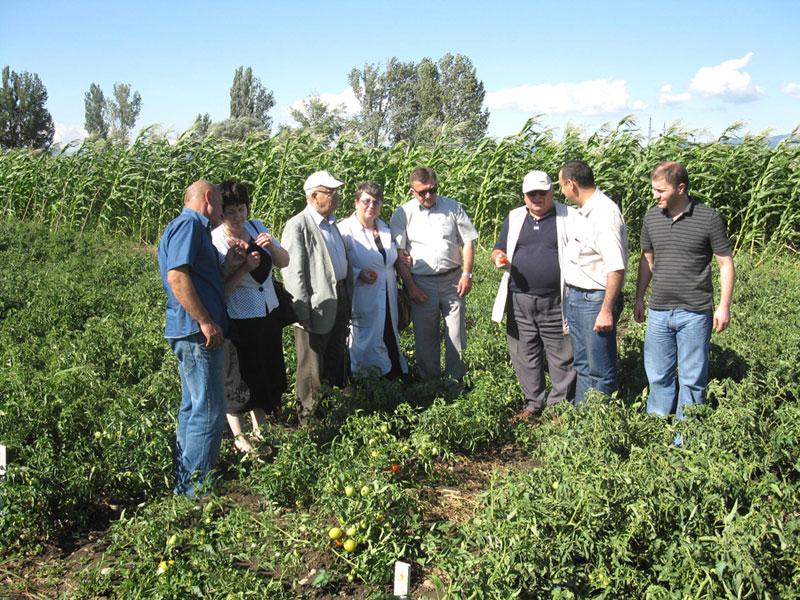 Experimental field probation in Research Institute of Crop Husbandry