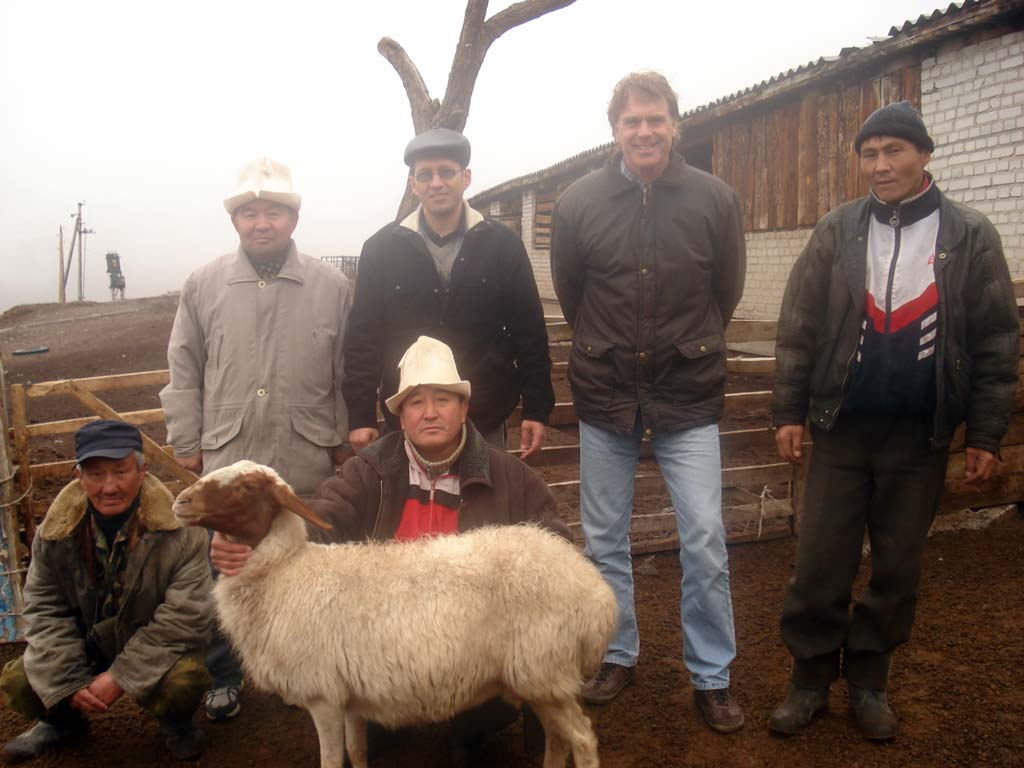 Awassi sheep milk breed is adapting to Kyrgyz mountain conditions