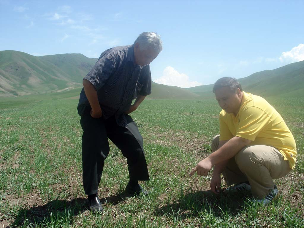 Kyrgyz and ICARDA specialists are inspecting of experiment results